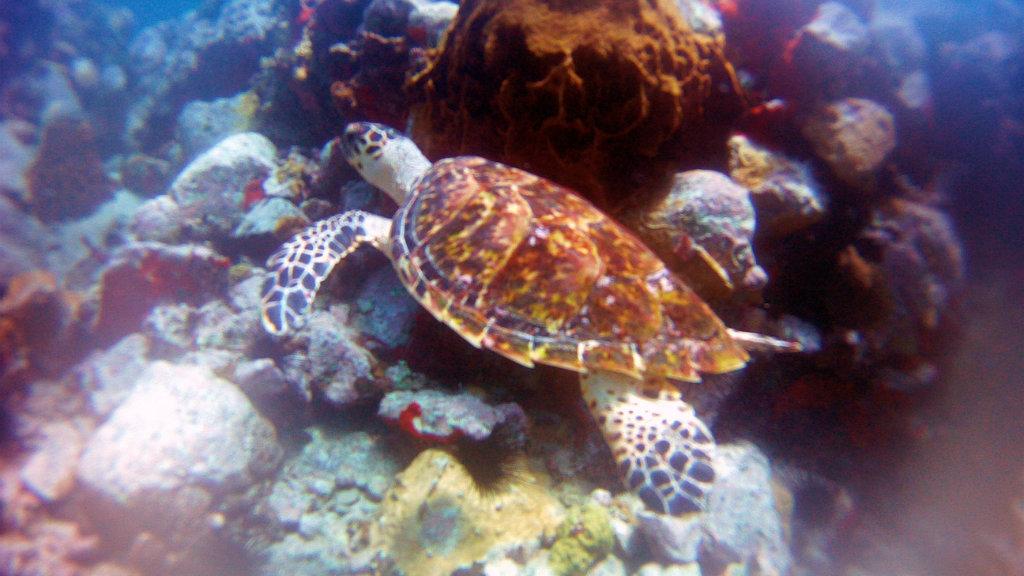Guadeloupe - Kite (22)