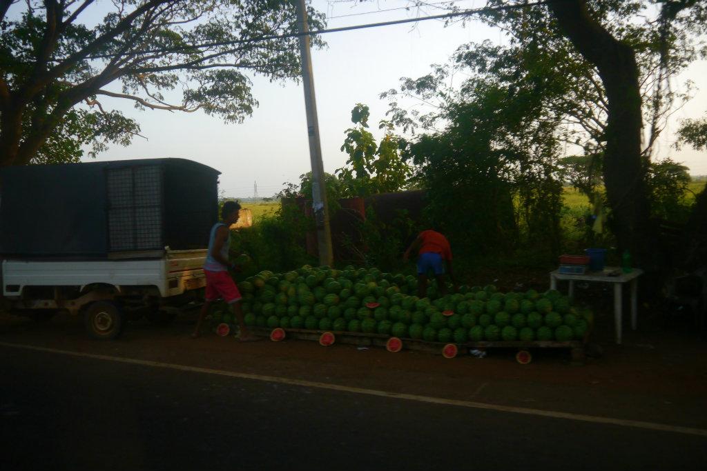 Sri Lanka (28)