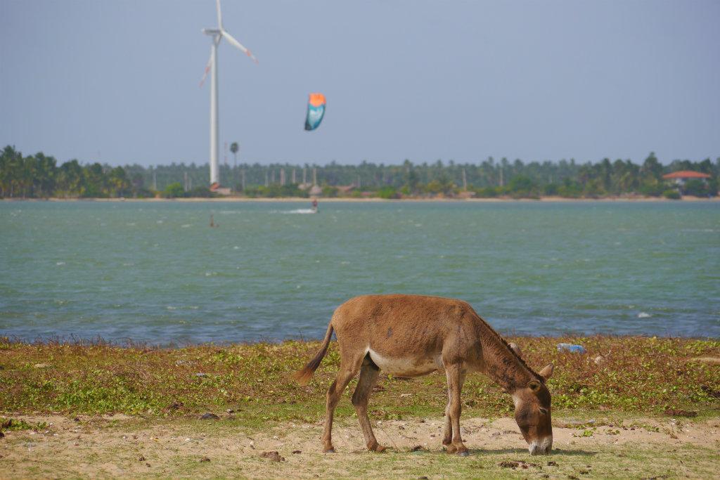 Sri Lanka (24)